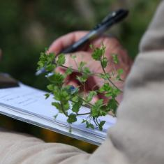 Specimens, Trengwainton Garden