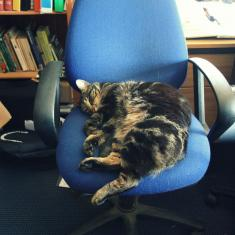 Alfred the cat on the Head Gardener's chair