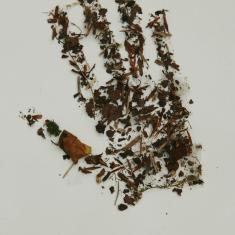Autumn handprint. photo © Barbara Santi