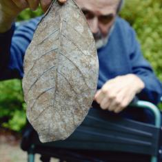 David with leaf. Photo © Barbara Santi