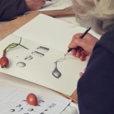 Drawing a shallot, Trengwainton botanical illustration Spring course