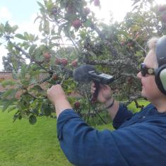 Samme recording the sounds of the leaves. Photo © Jane Bailey