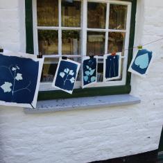 Cyanotypes. Trengwainton Garden