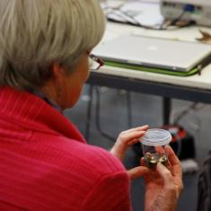 Looking at micro propagated samples 2